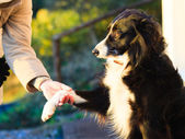Dog paw and human hand doing a handshake outdoor — Stock Photo