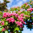 Close-up branch of beautiful blossoming pink flowers — Stock Photo #47046885