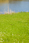 Green grassy shore of the lake or river — Stock Photo