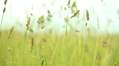 Green grass on the field — Stock Video
