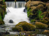Waterfall in woods green forest. Stream in oliva park gdansk. — Stock Photo