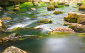 Stones in woods forest. Stream in gdansk oliva park. — Stock Photo