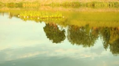 Reflection of countryside rural scene meadow in lake water — Stock Video
