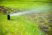 Lawn sprinkler spraying water over grass. — Stock Photo