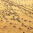 Landscape view on footprints at sandy beach — Stock Photo #49547787