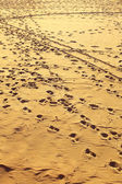 Landscape view on footprints at sandy beach — Stock Photo