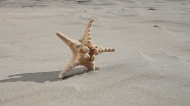 Starfish  on the sandy beach. — Stock Video