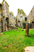 KILCREA, IRELAND - NOVEMBER 28: Kilcrea Friary on November 28, 2012 in Co.Cork, Ireland — Stok fotoğraf