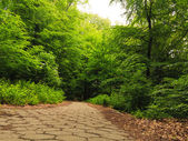 Sidewalk walking pavement in a park or forest — Stock Photo