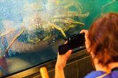 Crab in in aquarium — Stock Photo