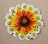 Circle of flowers, daisies — Stock Photo