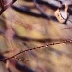 Autumn pattern — Stock Photo