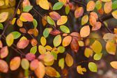 Autumn pattern with red, green, and yellow leaves — Stock Photo