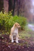 Puppy in the autumn park — Stockfoto