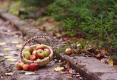 Apples in the forest — Stock Photo