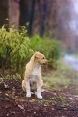 Puppy in the autumn park — Stock Photo