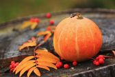 Pumpkin with fall leaves and rowanberry — Stock Photo