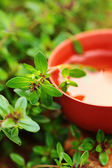 Cup of tea with herbs — Foto de Stock