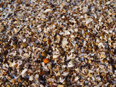 Sea shell background — Stock Photo