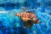 Carino piccolo pesce in un acquario — Foto Stock