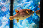 Schattige kleine vissen in een aquarium — Stockfoto