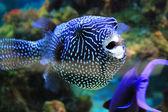 Cute little fish in an aquarium — Stock Photo