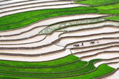 Terraced rice fields — 图库照片