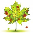 Royalty-Free Stock Vector Image: Maple Tree