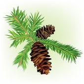 Pine tree branch — Stock Vector