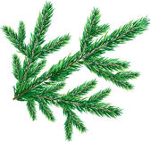 Christmas tree branch-1 — Stock Vector