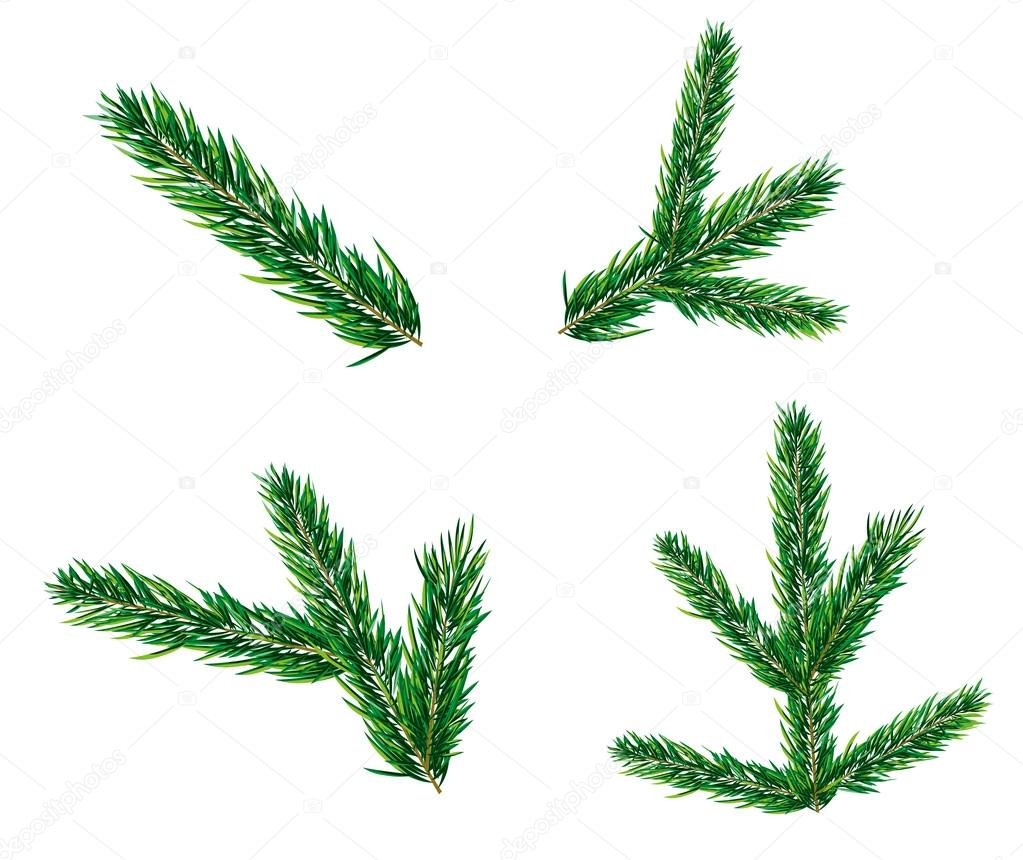 christmas tree branch vector - photo #37