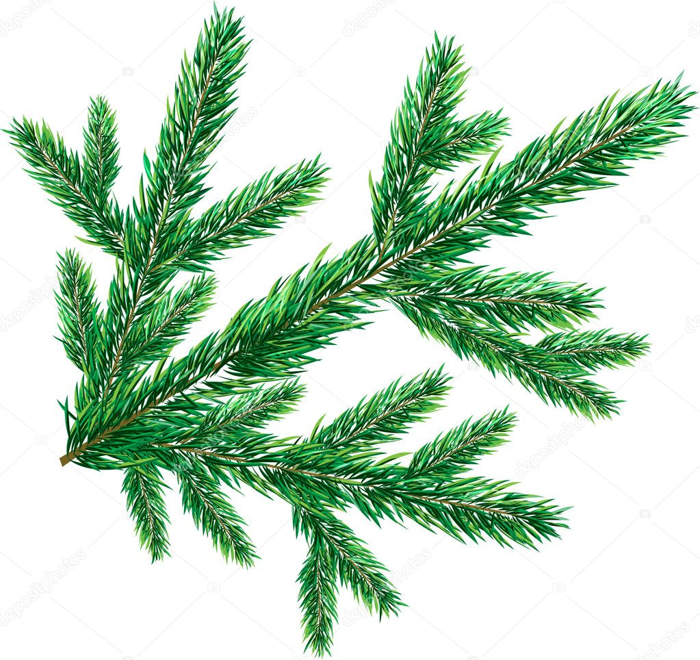 christmas tree branch vector - photo #35