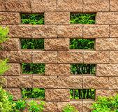 绿色的树叶,垂直分布格局与旧棕色砖围墙 — 图库照片