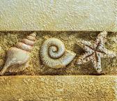 Zeeschelpen op bruine achtergrond, close-up met boven en onder kopie ruimte — Stockfoto