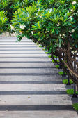 Chodnik w parku objęte plumeria drzewa — Zdjęcie stockowe