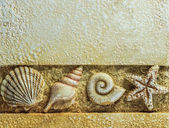 Sea Shells on Brown Background, Above Copyspace — Stock Photo