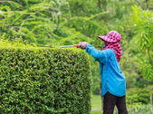 Professional gardener pruning an hedge in Tropical Park — Stock Photo