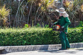 A Woman Trimming Hedge with Trimmer Machine — Stock Photo