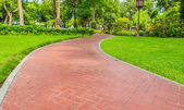 Brown Stone Walkway in the Tropical Park — Stock Photo