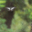 Butterfly on Netted Background, Vertical shot, Closeup — Stock Photo