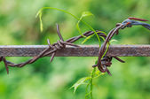Barbed Wire in Nature Blurred Background — Stock Photo