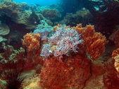 Soft coral, Vietnam, Nha Trang — Stok fotoğraf