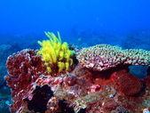 Sea lily, Vietnam, Nha Trang — Stock Photo