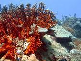 Stenen koraal, vietnam, nha trang — Stockfoto