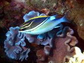 Pesci corallini, vietnam — Foto Stock