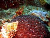 Corallo pietra, vietnam — Foto Stock