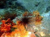 Morski czesak, wietnam — Zdjęcie stockowe