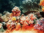 Zachte koraal, vietnam — Stockfoto