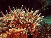 Stenen koraal, vietnam — Stockfoto