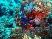 Starfish, Vietnam — Stock Photo